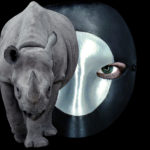 exhibition-of-a-rhinoceros-in-venice