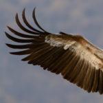 wing 5