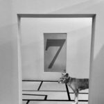 7 Cries Thylacine